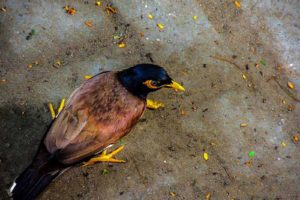 Agency, Ethics and Family: The Story of the Stumbling Starling